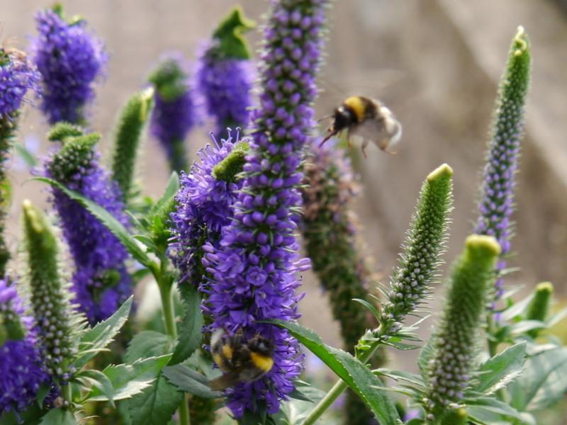 Tipps - Wildbienenschreiner